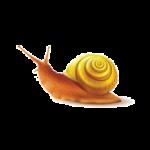 snail-clip
