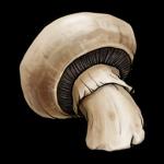 mushroom-clip